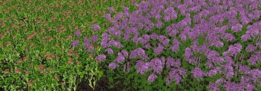 Fruit varieties clover and alfalfa v1.0
