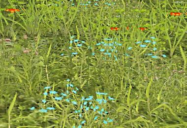 Grass Texture With Flowers