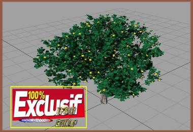 Citronnier arbre