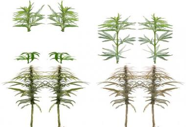 Industrial hemp texture v1.0