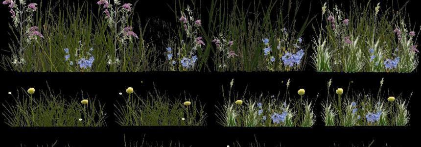 Grass v1.0
