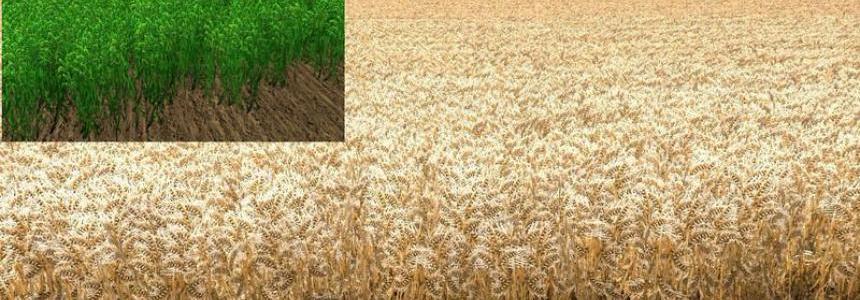 Nova texture wheat barley v1.0 mais