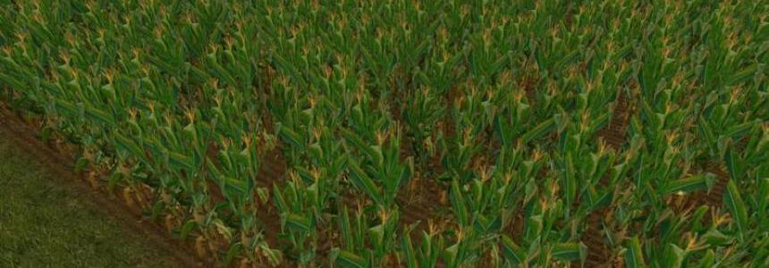 NEW Maize Texture v1.0