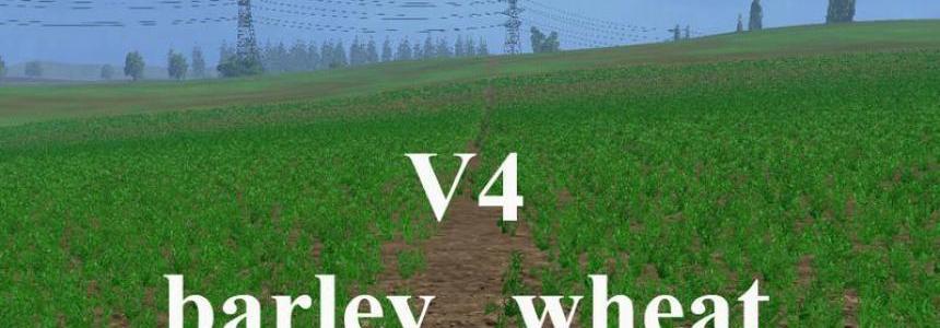 Weizen Textur von Gerste und Raps v4