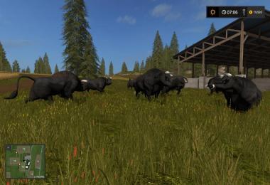 Black Bull v1.0