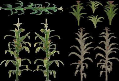 Corn Texture v1.17