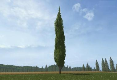 Placeable poplar v1.0