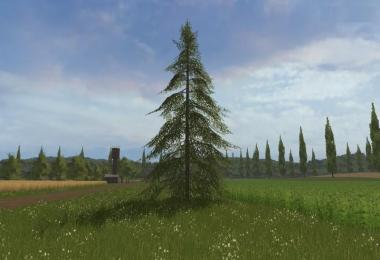 Small fir tree v1.0