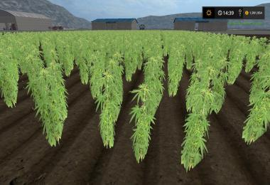 Cannabis Crop v1.0