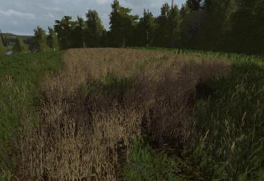 Lupine texture v1.0