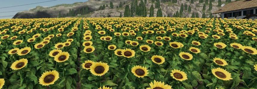 Forgotten Plants - Sunflower/Canola v1.0