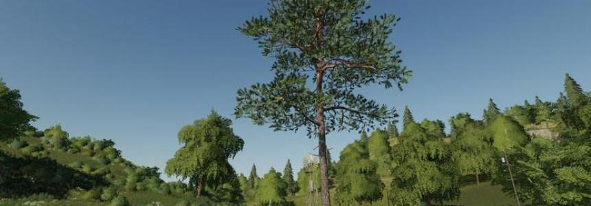 Pine can be placed v1.0