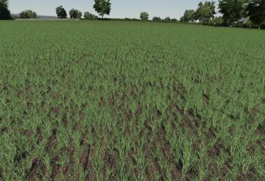 Realistic Cereal and Canola Crop Densities v1.0