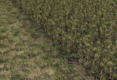 Oat, Soybean, Oilseed radish, Sugar Beet v1.0.0.0
