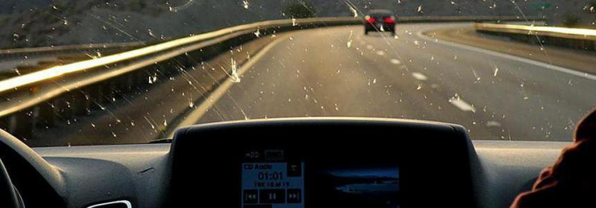 Insects on windshield v1.2