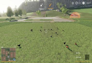 FS19 Free Range Chickens v1.0