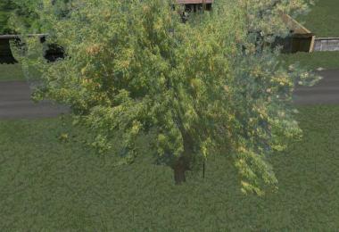 Akacia tree v1.0.0.0