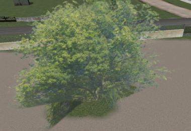 Big tree v1.0.0.0
